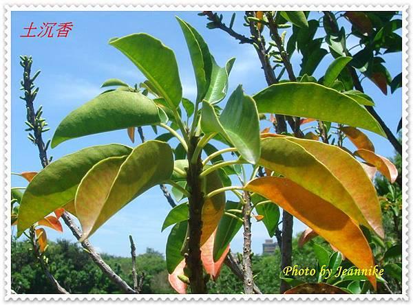 DSC06708-crop