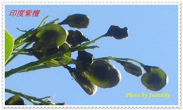 DSC06726-crop