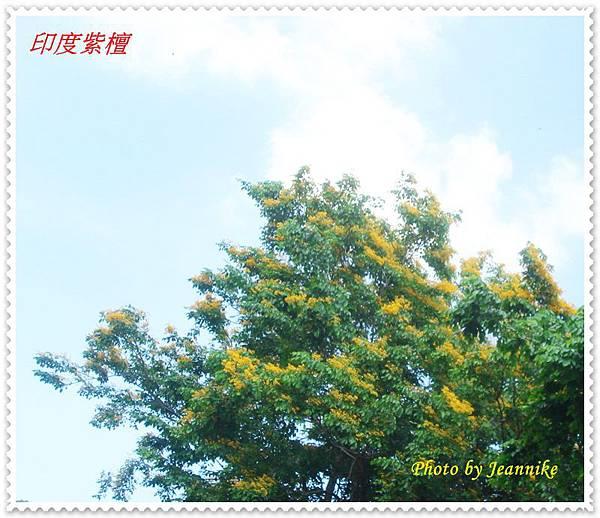 DSC06673-crop