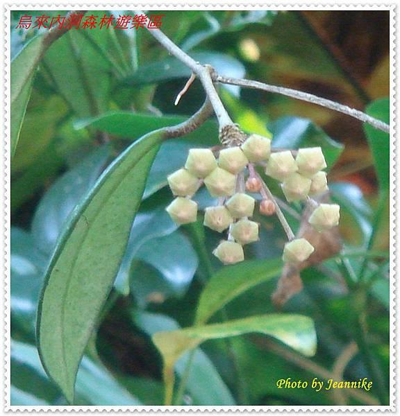 DSC06950-crop1