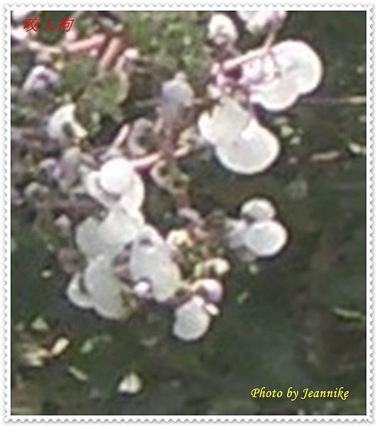 IMGP3205-crop2