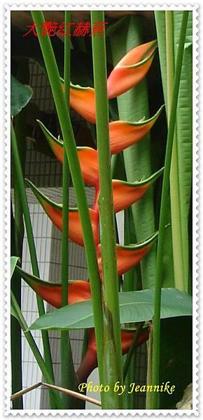 DSC01406-crop