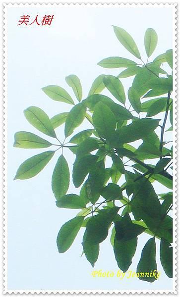 DSC02339-crop
