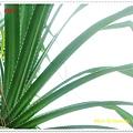 DSC03260-crop