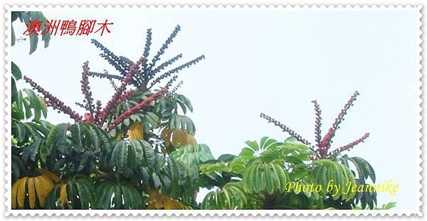 DSC08016-crop