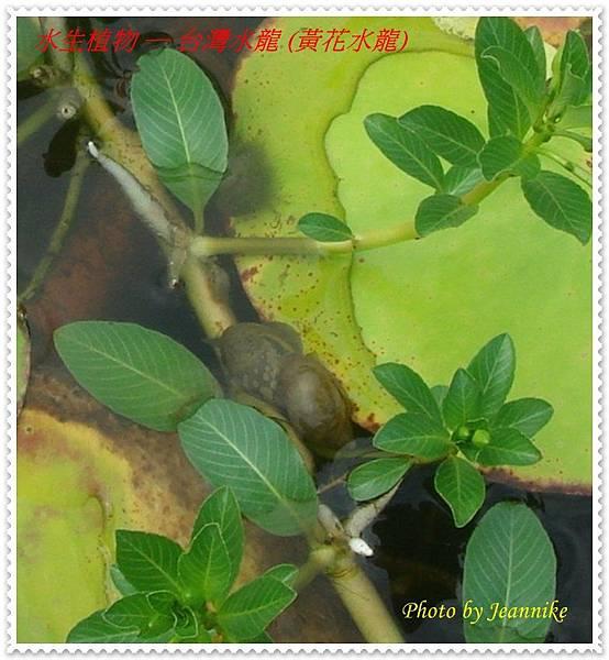 台灣水龍- 氣囊