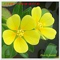 DSC08110-crop2