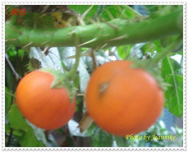 DSC08711-crop