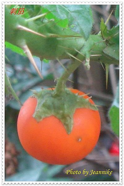 DSC08713-crop2