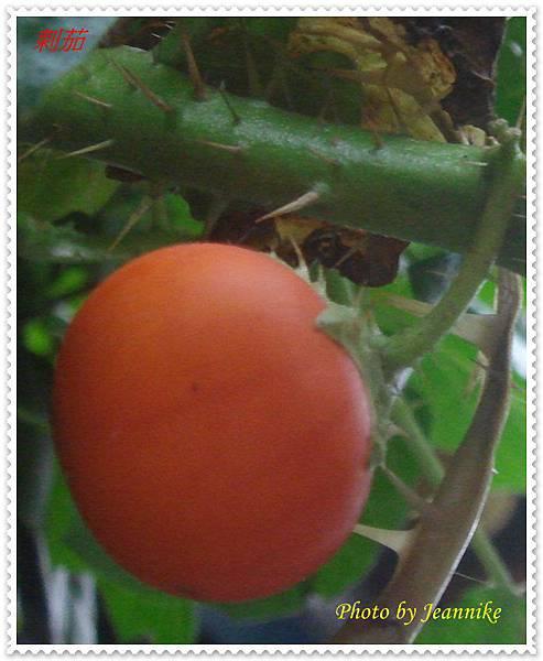 DSC08717-crop