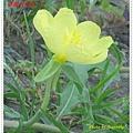 DSC08988-crop