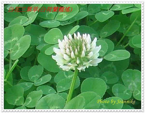DSC08926-crop2