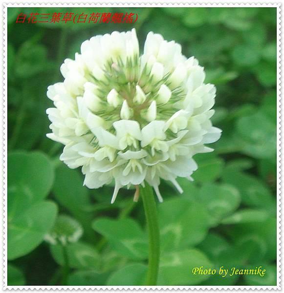DSC08936-crop