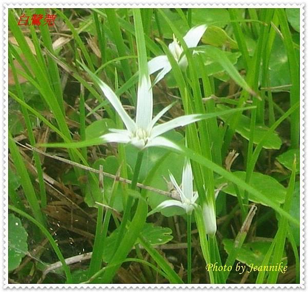 DSC09602-crop