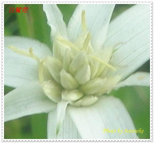 DSC09605-crop