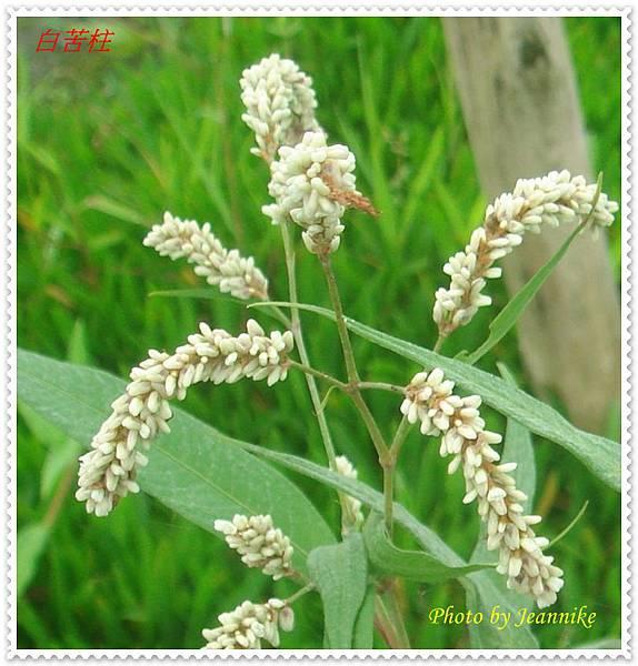 DSC00011-crop