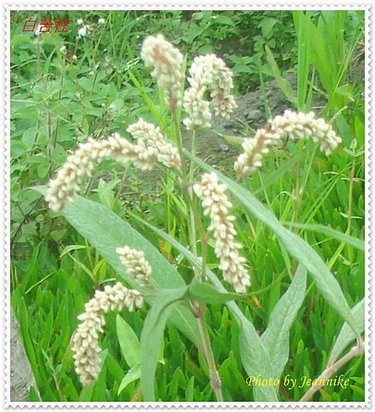 DSC00012-crop