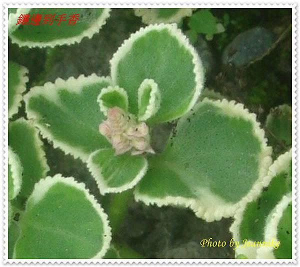 DSC00045-crop3