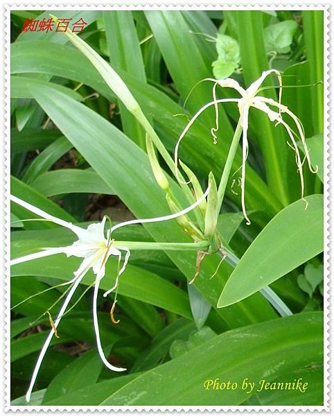 DSC00030-crop