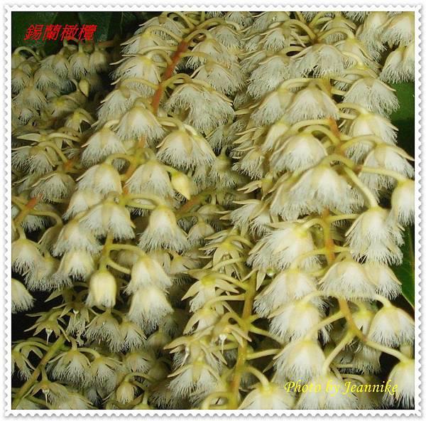 DSC07706-crop.JPG