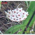 DSC00225-crop.JPG