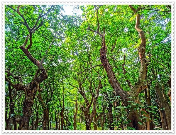 森林之美.JPG