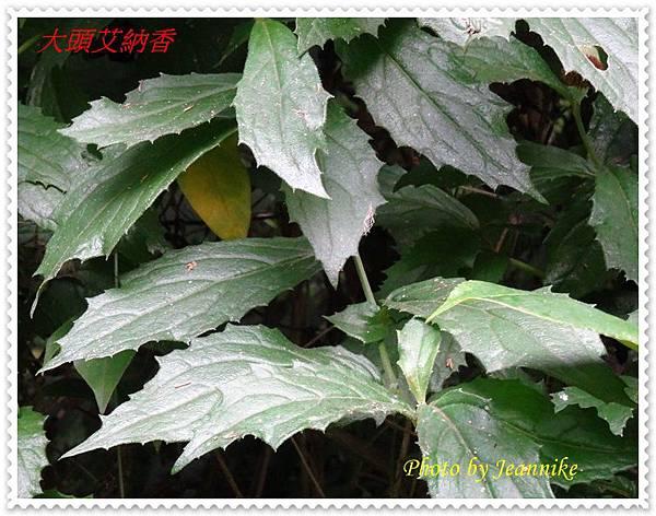 DSC01132-crop.JPG
