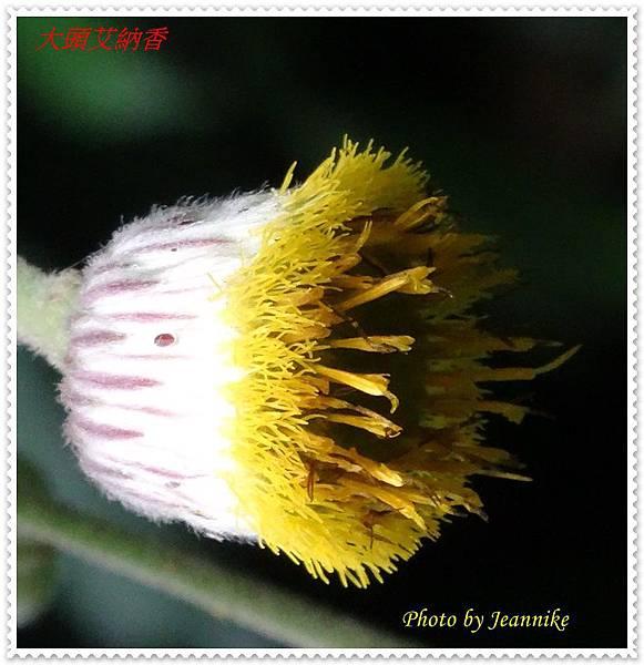 DSC01136-crop1.JPG