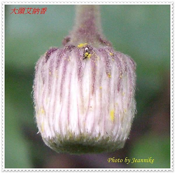 IMGP9104-crop.JPG