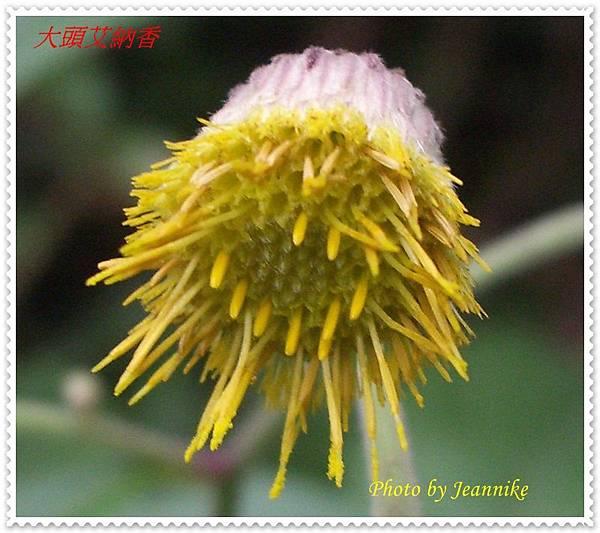 IMGP9105-crop.JPG