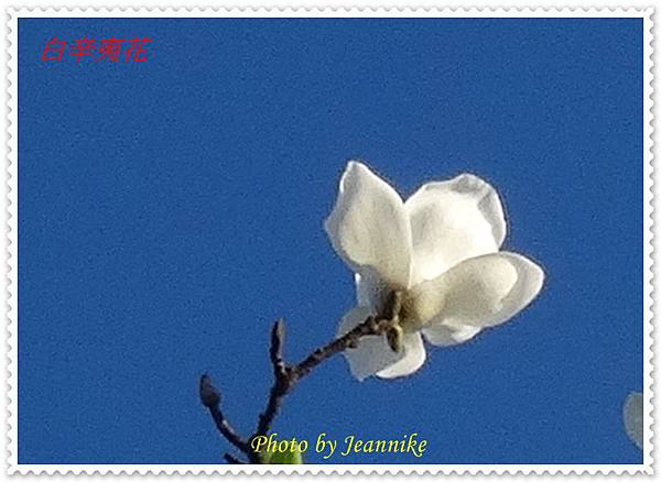 DSC03444-crop2.JPG
