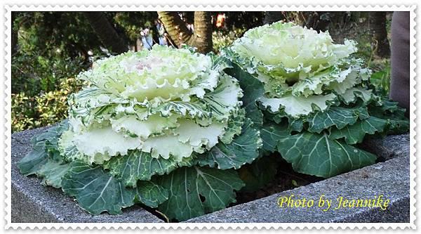 DSC03563-crop.JPG