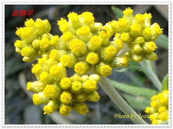 DSC01964-crop.JPG