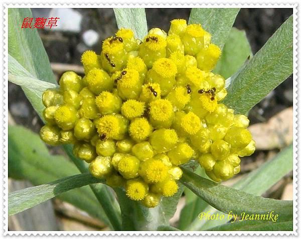DSC01967-crop.JPG