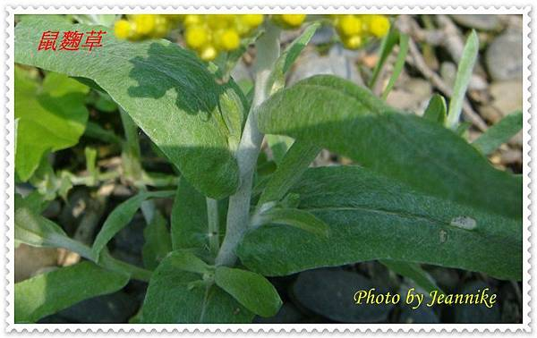 DSC01970-crop.JPG
