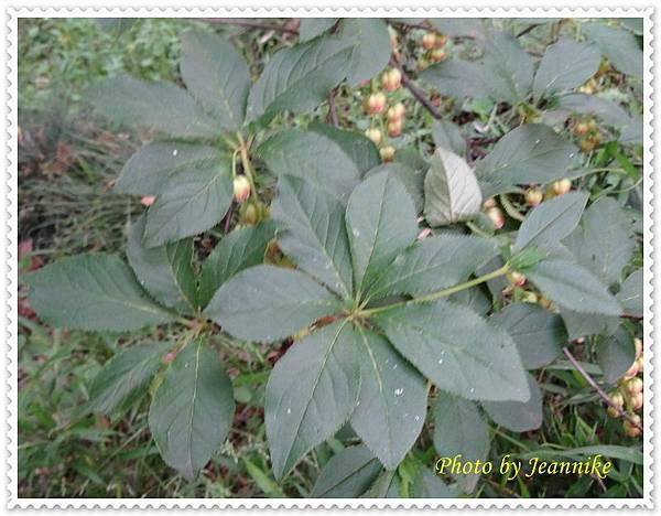 DSC06147-crop.JPG