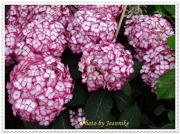 DSC06029-crop.JPG