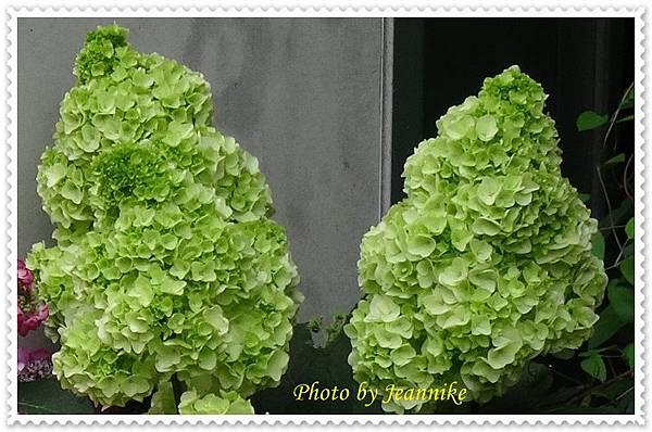DSC06033-crop.JPG