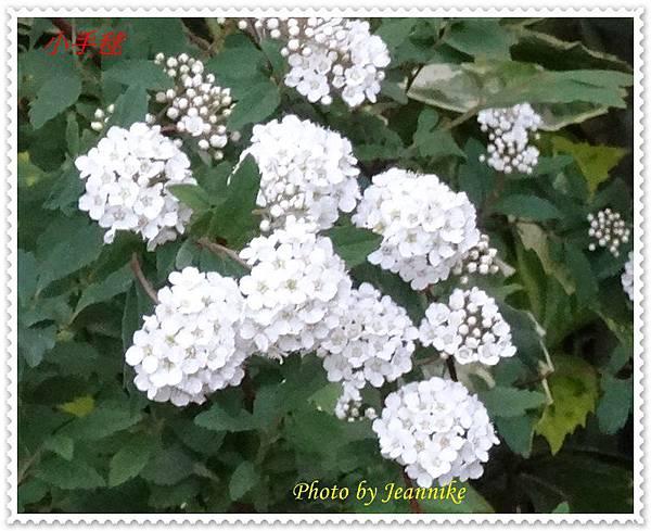 DSC04963-crop.JPG