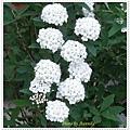 DSC04967-crop.JPG