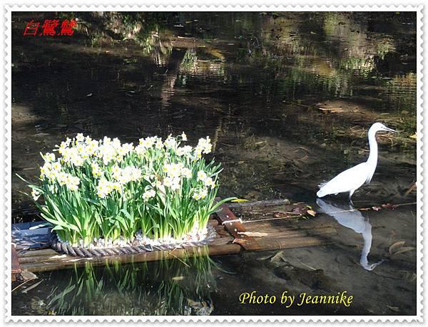 白鷺鷥.JPG