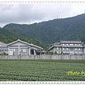 IMGP2625-crop.JPG