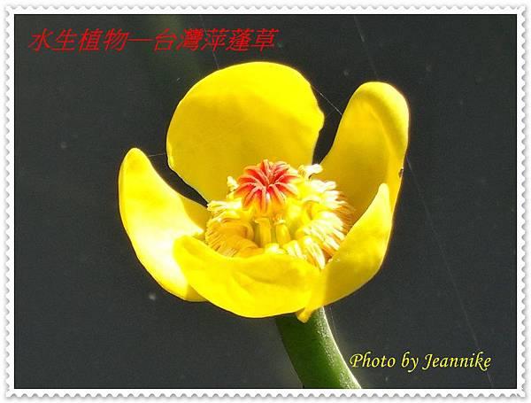DSC09577.JPG