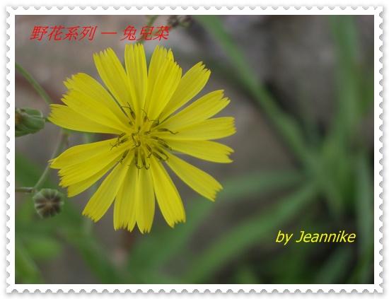 IMGP6866.JPG