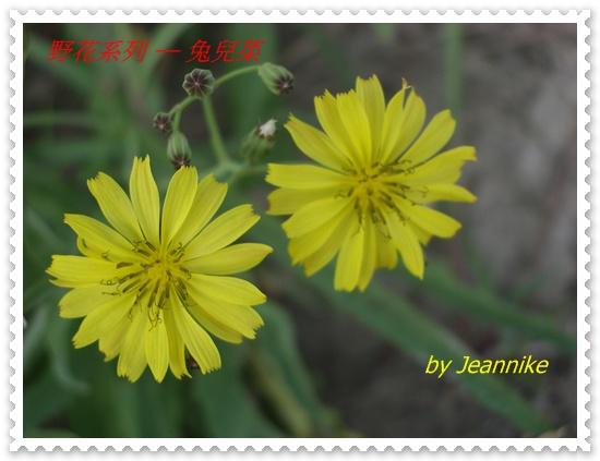 IMGP6867.JPG
