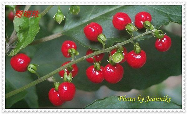 IMGP2958-crop.JPG