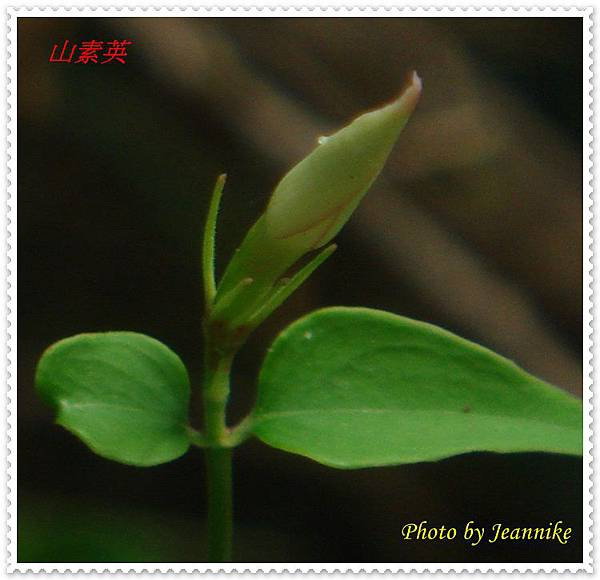 DSC00001-crop.JPG
