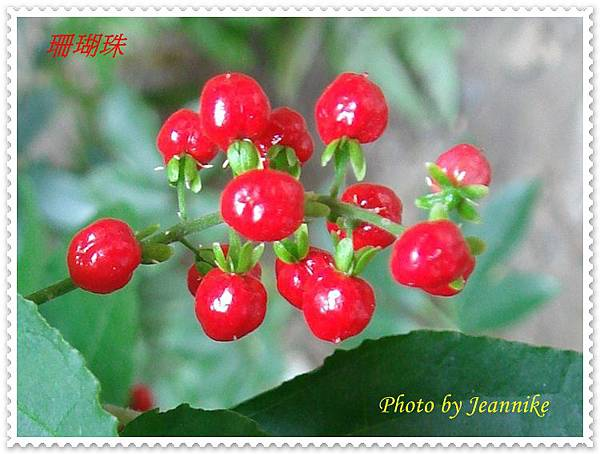 DSC09674-crop.JPG