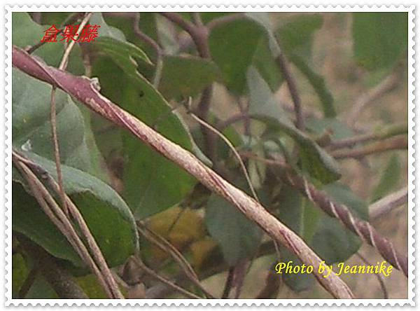 IMGP2895-crop.JPG