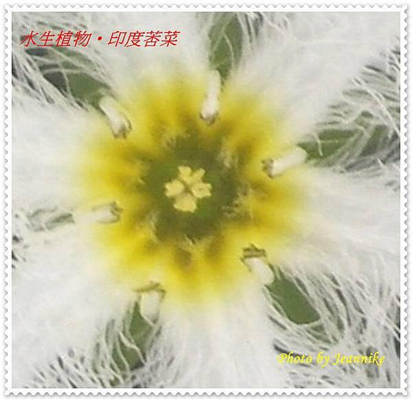 IMGP2839-crop-crop1.JPG
